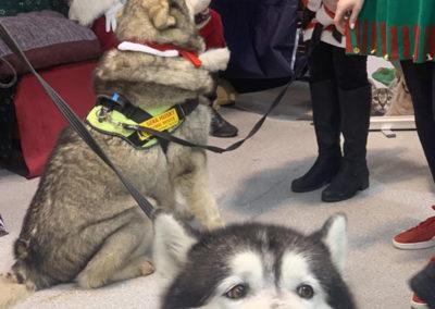 Sera Husky Santa (26)