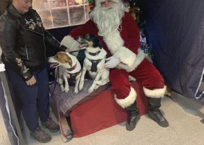 Sera Husky Santa (45)