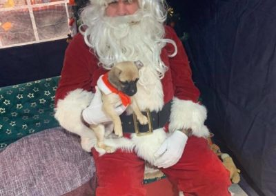 Sera Husky Santa (5)